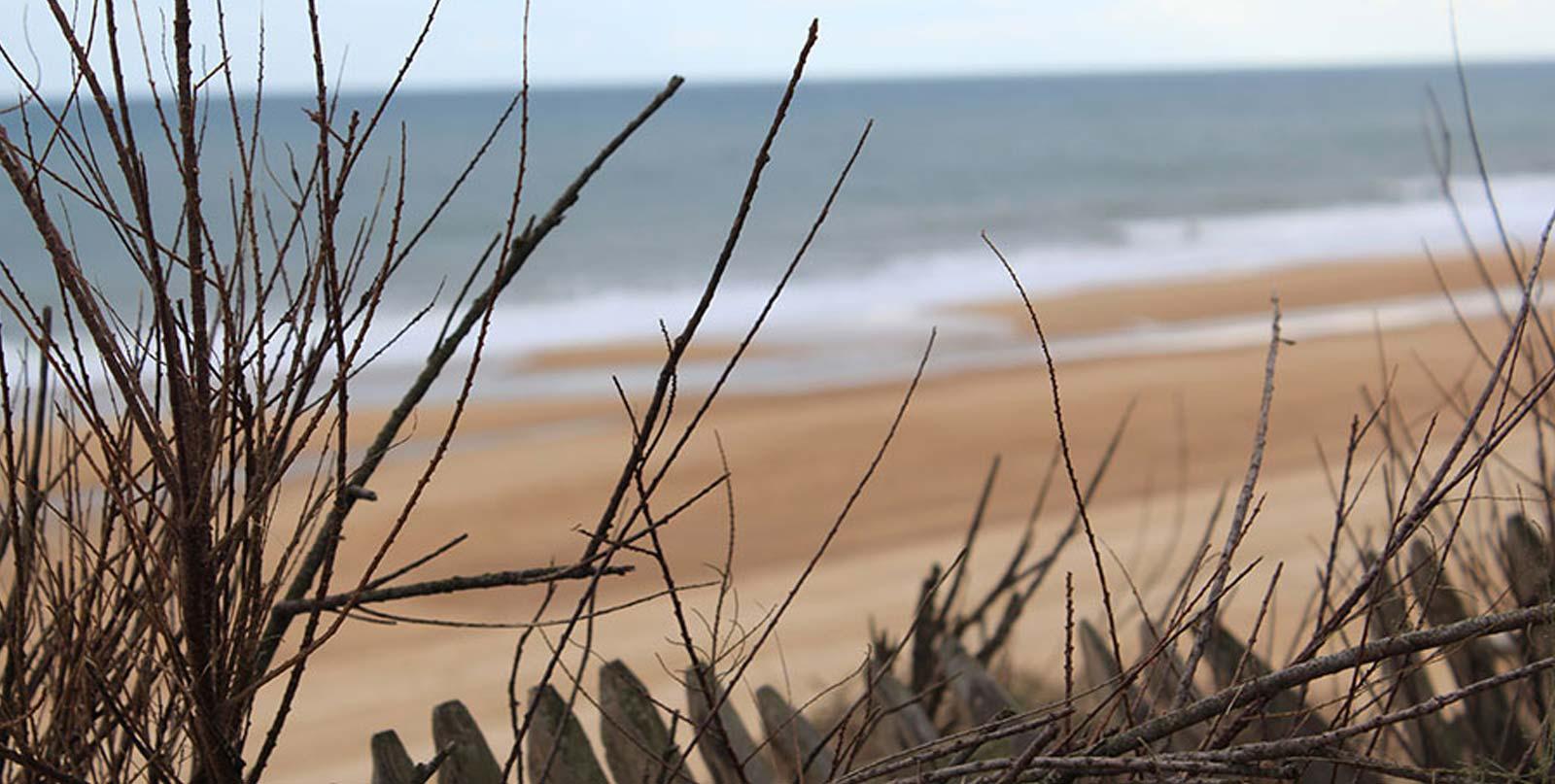 vue plage et océan du haut d'une dune